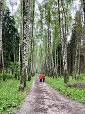 На изображении может находиться: дерево, растение, на улице и природа